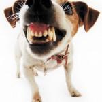 Dogteeth